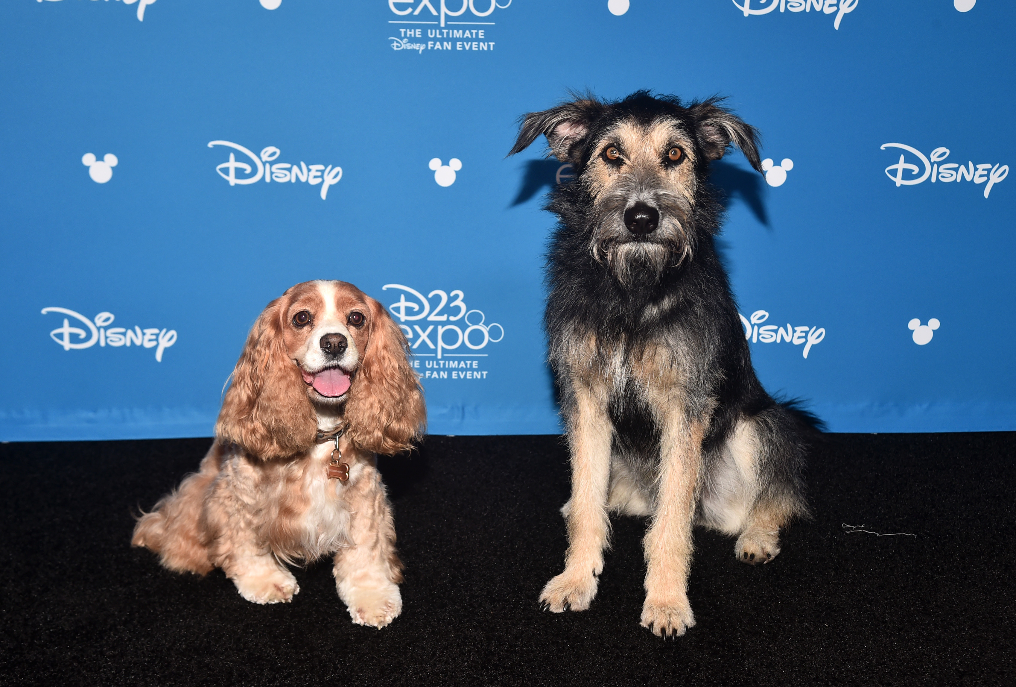 Meet Monte Kill Shelter Rescue Dog In Lady And The Tramp Remake Wonderwall Com