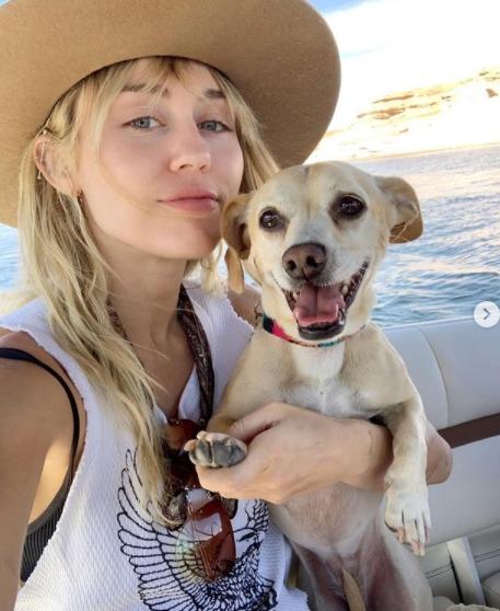 Miley Cyrus dog